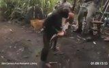 Maymunun eline silah verilirse ne olur?