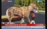 Atların Atası Ahal Teke