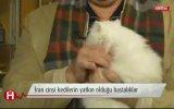 Persian Kedisi - Dostlarımız