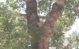 Ağaçta mahsur kalan kediyi itfaiye kurtardı - KAYSERİ