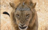 En İlginç 11 Hayvan Çiftleşmesi ve Ritüeli