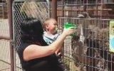 Deve Kuşuna Kahkahalar Atan Bebek