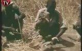 Afrika'da Piton Avı