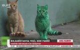 Yeşil Kedinin Sırrı Çözüldü