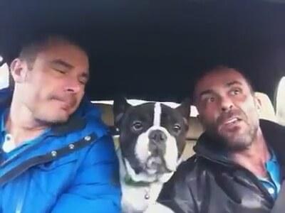 Arabada sarkiya eslik eden sevimli bulldog 7972492 28630 600x315