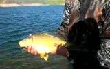 sazan balığı bırakma videosu