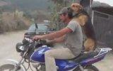 Sahibiyle Motora Binen Köpek
