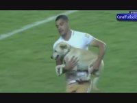 Sahaya Dalan Aşırı Mutlu Köpek